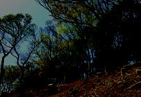 森林破壊への取り組みの写真