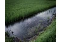 圃場整備と環境問題の写真