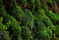 藻から作ったオイルでエネルギー問題を解決!の写真