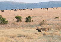絶滅危惧種と環境の関係の写真