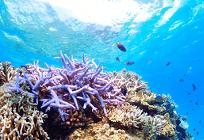 サンゴ礁と人間の写真