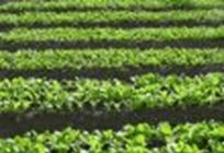 二酸化炭素が増えると植物の栄養素が減る?の写真