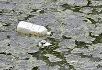 増え続ける海洋ゴミについて考えるの写真