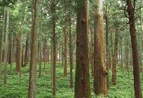 伐採後放置されてしまう木々の写真