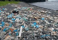 レジ袋がもたらす有毒な魚の写真