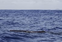 捕鯨問題についての写真