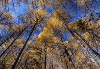 豊かな暮らしの裏側で行われる森林伐採の写真