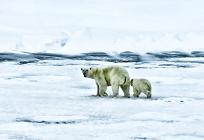 環境問題による動植物への影響の写真